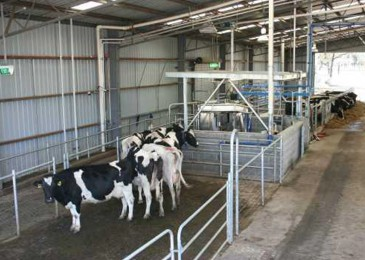 Smooth start to FutureDairy