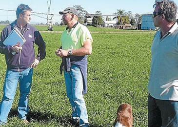 Pastures perform well with crops