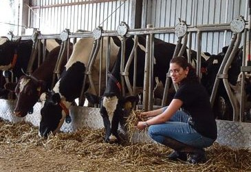 Are you a talker or a listener when it comes to cows?