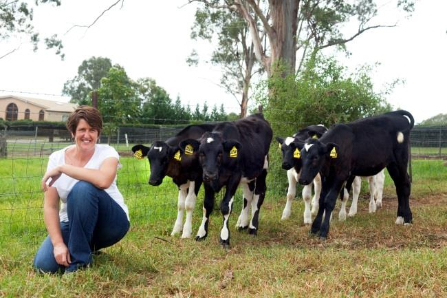 Raising Cows for AMS