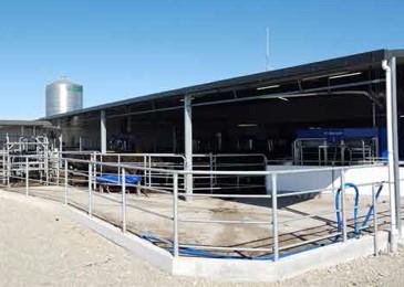 Robotic milking on New Zealand's finest pastures